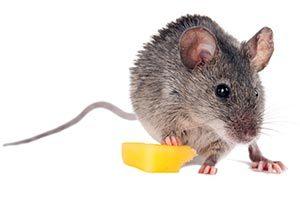 Mit Speck fängt man Mäuse - Kundenspezifikation